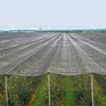 Poljoprivrednu proizvodnju ugrožava nedostatak protivgradne zaštite