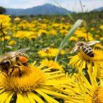 Održan drugi međunarodni seminar pčelarstva u Bujanovcu
